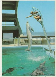 Dolphins Perform at Oceana